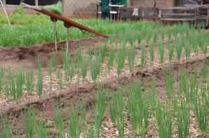 Biologische Landwirschaft